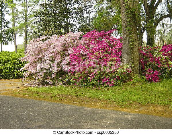 Azalea Glade - csp0005350