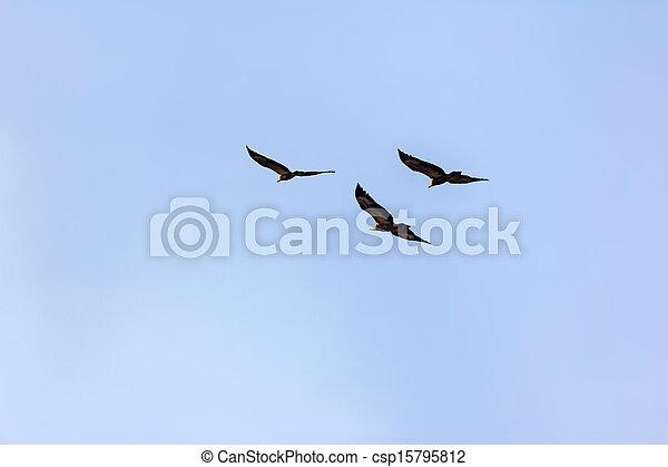 azul, águia, voando, céu - csp15795812