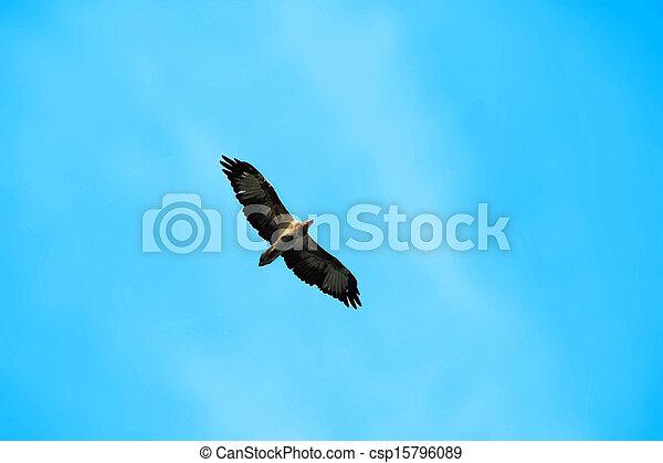 azul, águia, voando, céu - csp15796089