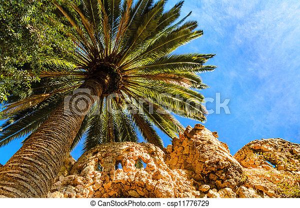 Palm Tree contra un cielo azul - csp11776729