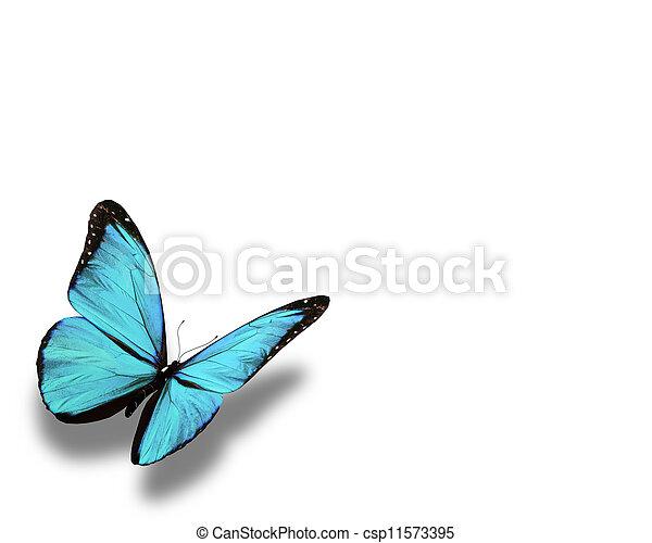 Mariposa azul, aislada en blanco - csp11573395