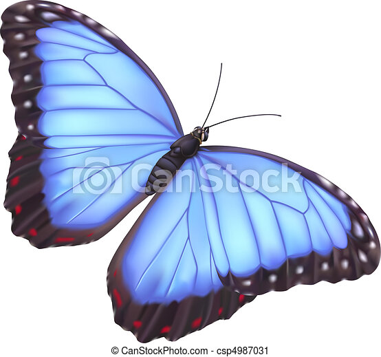 azul, borboleta, morpho - csp4987031