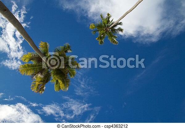 Dos palmeras de coco contra el cielo tropical azul - csp4363212