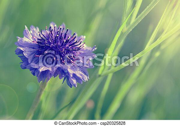 Un look retro de coliflor azul - csp20325828