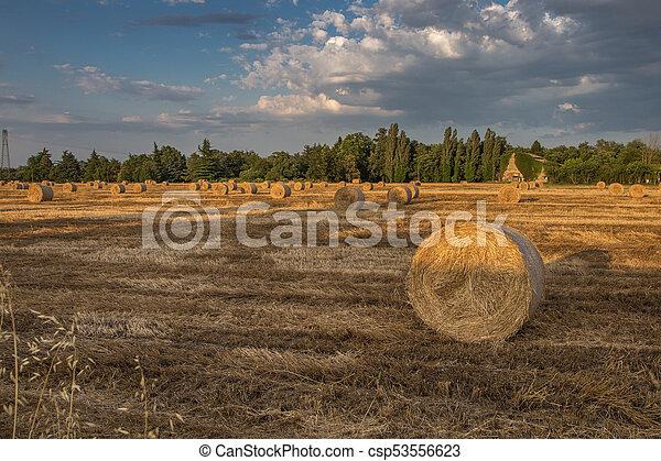 Hermoso paisaje campestre: fardos de heno dorados en campos cosechados y cielo azul con nubes - csp53556623