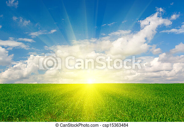 Los cultivos de hierba verde contra el cielo azul - csp15363484