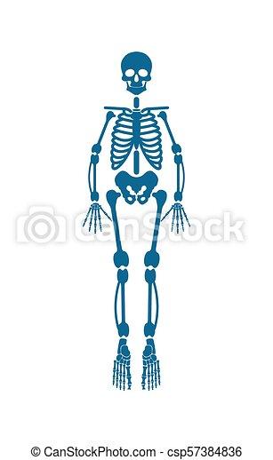 Azul, esqueleto, color, ilustración, vector, humano. Azul, cuerpo ...