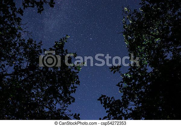 Cielo oscuro azul con muchas estrellas sobre el campo de los árboles. - csp54272353