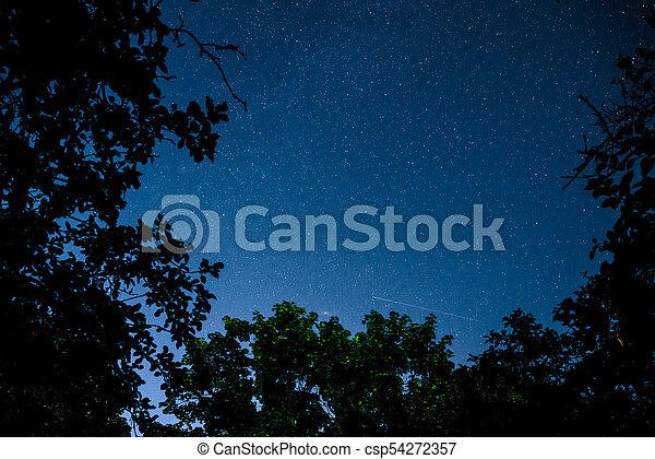 Cielo oscuro azul con muchas estrellas sobre el campo de los árboles. - csp54272357