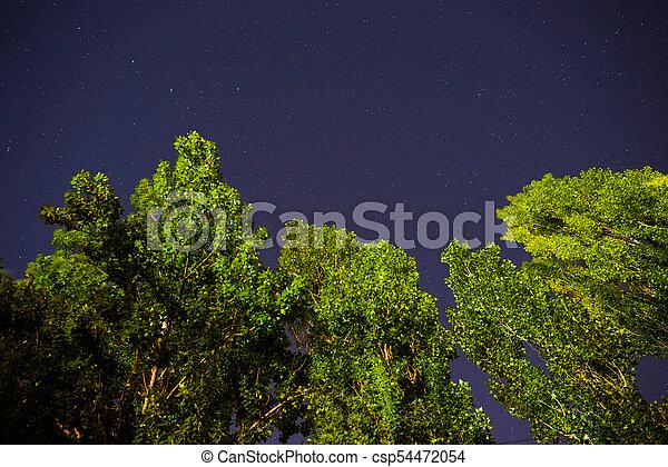 Cielo oscuro azul con muchas estrellas sobre el campo de los árboles. - csp54472054