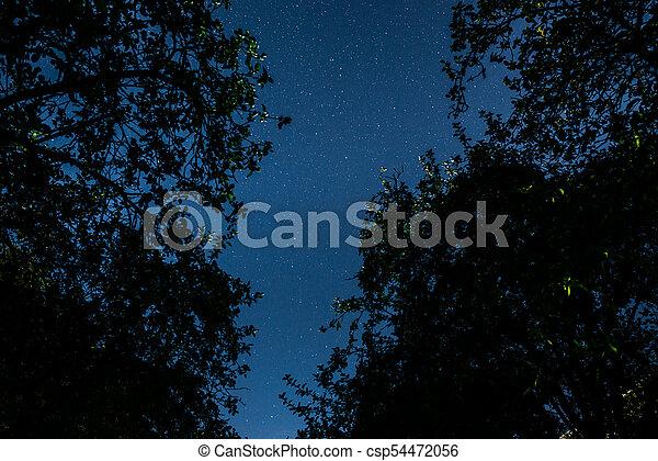 Cielo oscuro azul con muchas estrellas sobre el campo de los árboles. - csp54472056