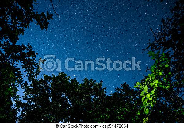 Cielo oscuro azul con muchas estrellas sobre el campo de los árboles. - csp54472064