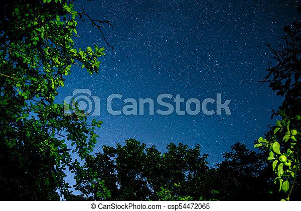 Cielo oscuro azul con muchas estrellas sobre el campo de los árboles. - csp54472065