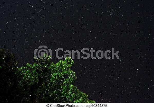 Cielo oscuro azul con muchas estrellas sobre el campo de los árboles. - csp60344375