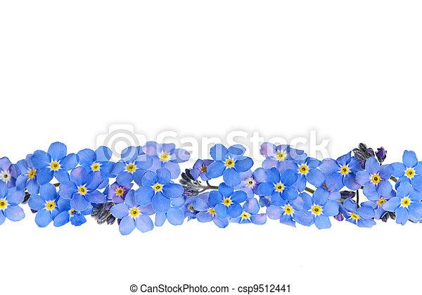azul, flor de primavera, frontera - csp9512441