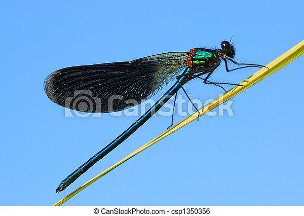 azul, libélula, cielo, plano de fondo, resto, tiene - csp1350356