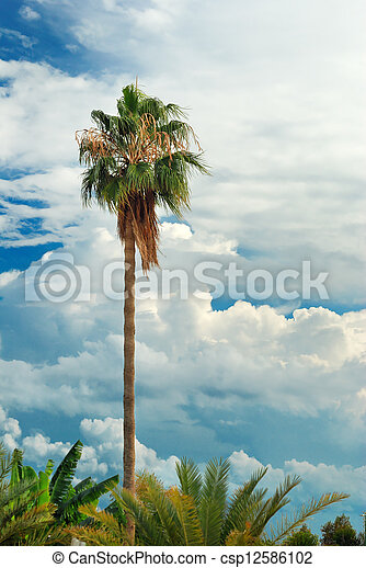 Palm Tree sobre el cielo azul con nubes de cúmulos - csp12586102