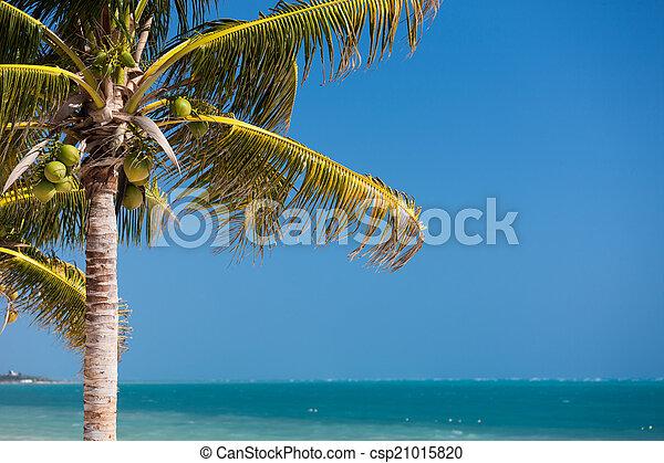 Palm Tree sobre el cielo azul con nubes blancas - csp21015820