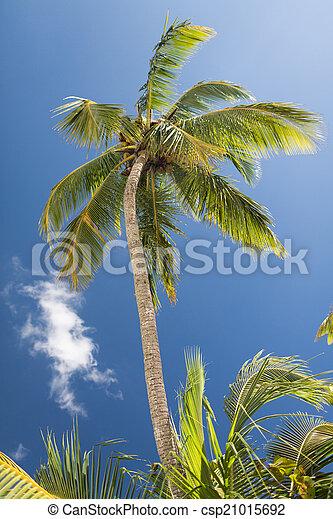 Palm Tree sobre el cielo azul con nubes blancas - csp21015692