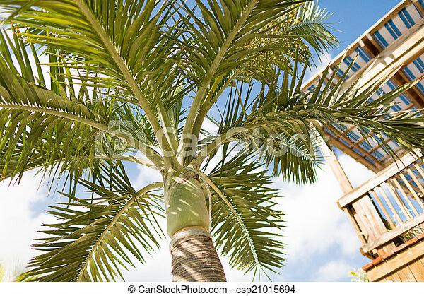 Palm Tree sobre el cielo azul con nubes blancas - csp21015694
