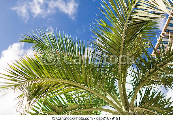 Palm Tree sobre el cielo azul con nubes blancas - csp21679191