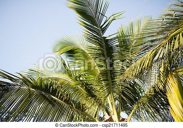 Palm Tree sobre el cielo azul con nubes blancas - csp21711495