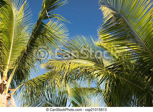 Palm Tree sobre el cielo azul con nubes blancas - csp21015813