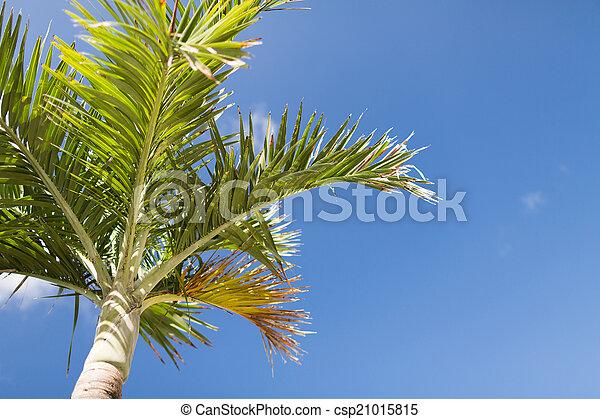 Palm Tree sobre el cielo azul con nubes blancas - csp21015815