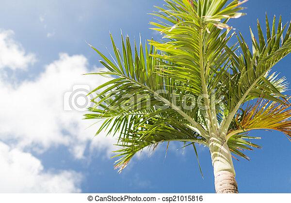 Palm Tree sobre el cielo azul con nubes blancas - csp21015816