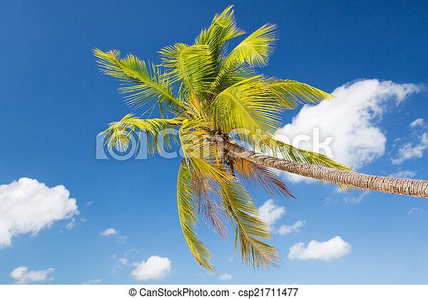 Palm Tree sobre el cielo azul con nubes blancas - csp21711477