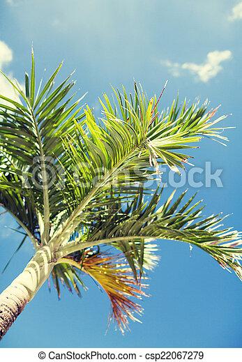 Palm Tree sobre el cielo azul con nubes blancas - csp22067279