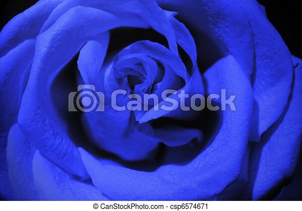 Rosa azul oscuro - csp6574671
