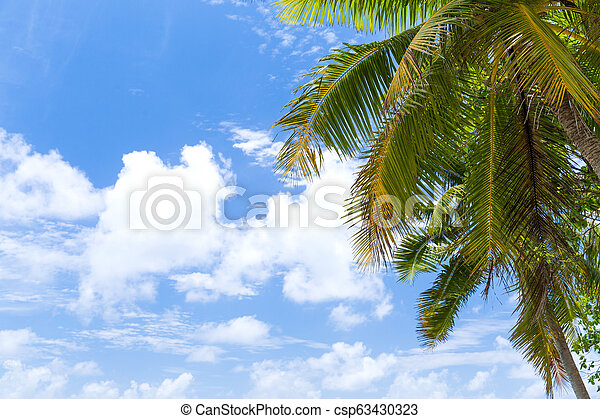 Palm Tree sobre el cielo azul - csp63430323