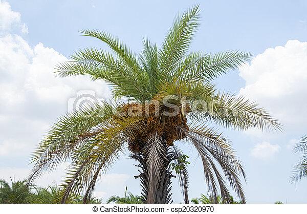 Palm Tree con cielo azul. - csp20320970
