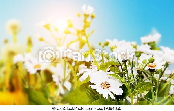 azul, primavera, cielo, flores, campo, herbs., sol, margarita - csp19894850