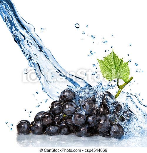 azul, uva, aislado, agua, salpicadura, blanco - csp4544066