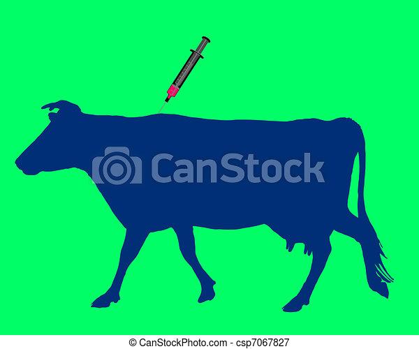 La vaca tiene una vacuna contra la enfermedad de la lengua azul - csp7067827
