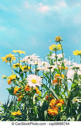 Flores de verano contra un cielo azul - csp58666744