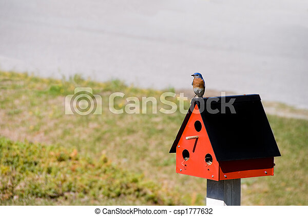 Bluebird oriental - csp1777632
