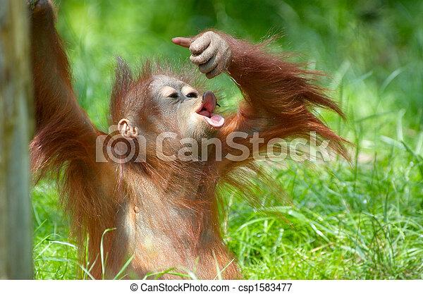 Fabulous Image de bébé, mignon, orang-outan - bébé, mignon, herbe, jouer  ZB61