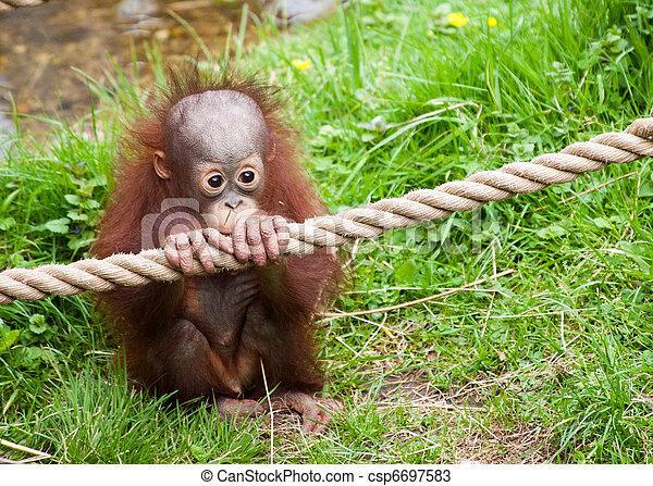Fabulous Photos de stock de bébé, mignon, orang-outan - mignon, orang-outan  ZB61