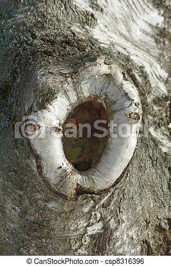 bárka, fa, háttér - csp8316396