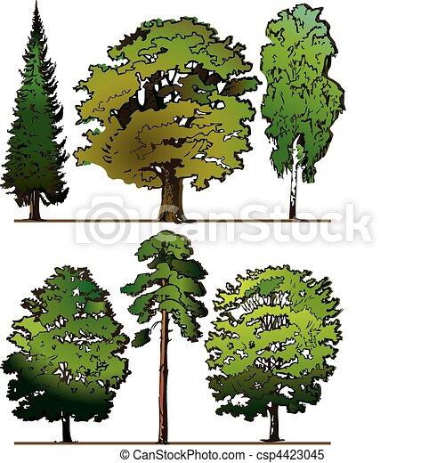 bäume. - csp4423045