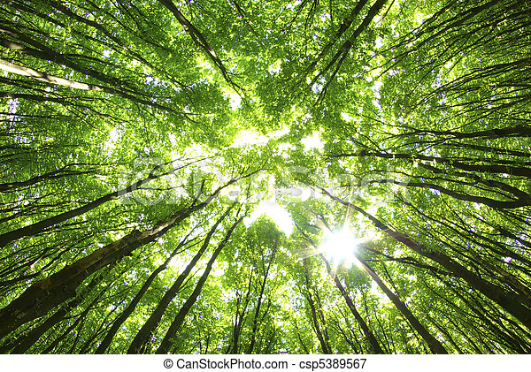 bäume, hintergrund - csp5389567