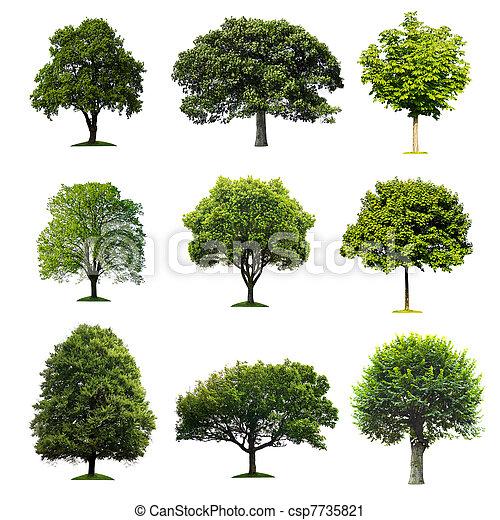 bäume, sammlung - csp7735821