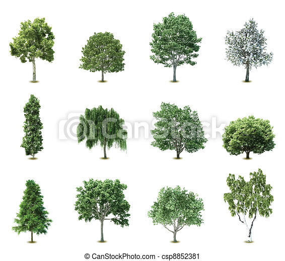 bäume., vektor, satz - csp8852381