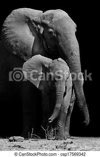 bébé, mère, éléphant - csp17569342