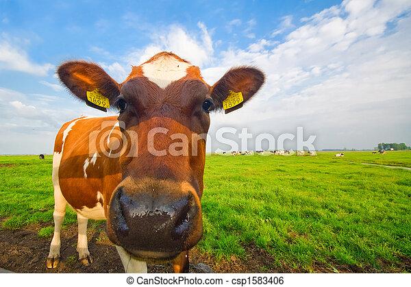 bébé, rigolote, vache, image - csp1583406