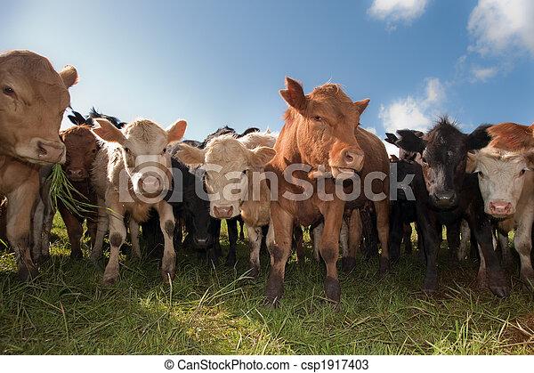 bétail, troupeau - csp1917403