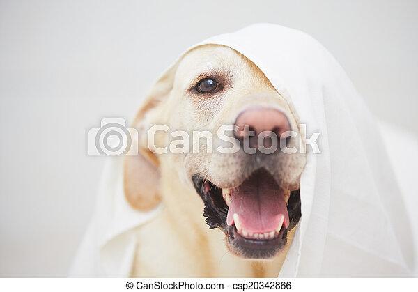 böses , hund - csp20342866